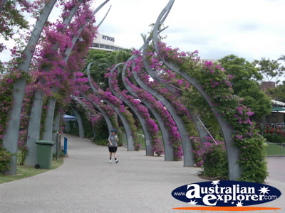 South Bank Parklands - Arbour