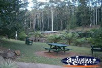 Tamborine Mountain Botanic Gardens Picnic Spot . . . CLICK TO ENLARGE