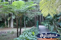Walkway in Tamborine Mountain Botanic Gardens . . . CLICK TO ENLARGE
