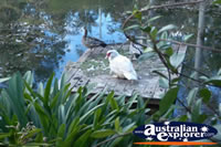 Tamborine Mountain Botanic Gardens with Bird . . . CLICK TO ENLARGE
