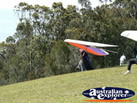Tamborine Mountain Hand glider . . . CLICK TO ENLARGE