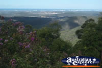 Scenic Views from Tamborine Mountain Lookout of Gold Coast Hinterland . . . CLICK TO ENLARGE