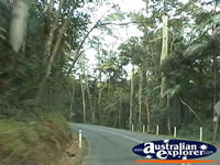 The Drive Up Tamborine Mountain . . . CLICK TO ENLARGE
