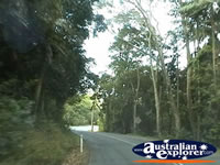 Street in Tamborine Mountain . . . CLICK TO ENLARGE