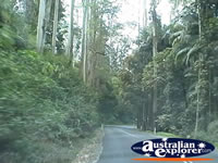 Tamborine Mountain Street . . . CLICK TO ENLARGE