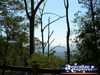 Tamborine Mountain View . . . CLICK TO ENLARGE