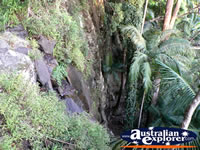 Waterfall on the Tamborine Mountain Walk . . . CLICK TO ENLARGE