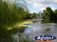 Picturesque Pond at Tamborine Mountain Winery . . . CLICK TO ENLARGE