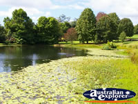 Great Shot of the Pond at Tamborine Mountain Winery . . . CLICK TO ENLARGE