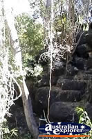 Undara Lava Tubes in QLD . . . CLICK TO ENLARGE