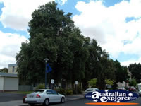 Bordertown Council . . . CLICK TO ENLARGE