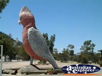 Big Galah in Kimba . . . CLICK TO ENLARGE