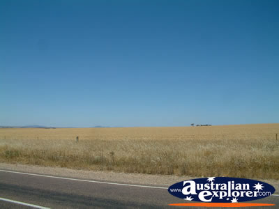 View between Kyancutta & Kimba . . . CLICK TO VIEW ALL KIMBA POSTCARDS