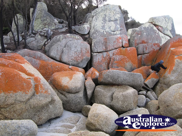 Bay of Fires in Mount William National Park . . . VIEW ALL BAY OF FIRES PHOTOGRAPHS