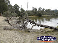 Lake and Fallen Tree . . . CLICK TO ENLARGE