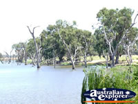 Landscape shot of creek between Cohuna & Echuca . . . CLICK TO ENLARGE