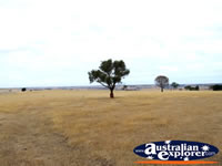 View between Casterton & Edenhope . . . CLICK TO ENLARGE