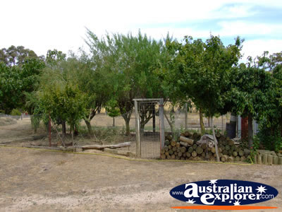 Cathcart Miners Cottage Backyard . . . VIEW ALL ARARAT PHOTOGRAPHS