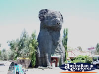 Giant Koala Between Horsham & Stawell . . . CLICK TO ENLARGE