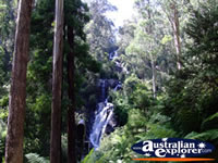 View of Steavenson Falls in Marysville . . . CLICK TO ENLARGE