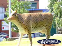 Spotted Shepparton Cow . . . CLICK TO ENLARGE
