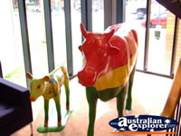 Shepparton Cow Statues . . . CLICK TO ENLARGE