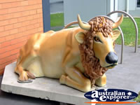 Shepparton Cow with Lion Maine . . . CLICK TO ENLARGE
