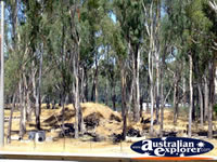 Cobram Bush . . . CLICK TO ENLARGE