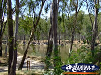 Cobram Murray River . . . CLICK TO ENLARGE