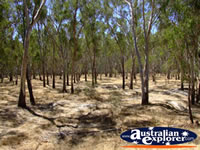 Dry Flood Plains in Cobram . . . CLICK TO ENLARGE