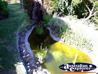 Yackandandah Beaumont B & B Small Pond . . . CLICK TO ENLARGE