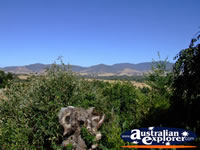 View of Yackandandah from Beaumont B & B . . . CLICK TO ENLARGE