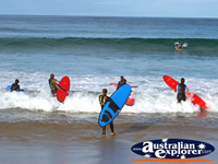 Surfers at Apollo Bay . . . CLICK TO ENLARGE