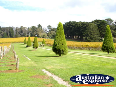 Picturesque Lindenderry Winery . . . VIEW ALL MORNINGTON (LINDENDERRY WINERY) PHOTOGRAPHS