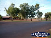 Trees at Halls Creek . . . CLICK TO ENLARGE