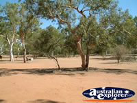 Mary Pool Trees on Way to Fitzroy Crossing . . . CLICK TO ENLARGE