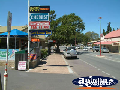 Dongara Street . . . CLICK TO VIEW ALL DONGARA POSTCARDS
