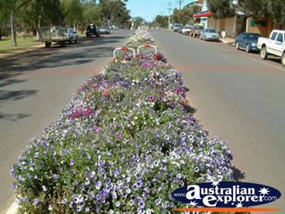 Dalwallinu main street . . . CLICK TO VIEW ALL DALWALLINU POSTCARDS