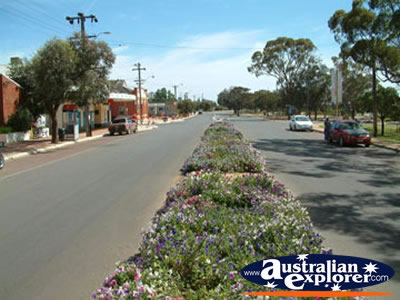 Pretty main street in Dalwallinu . . . CLICK TO VIEW ALL DALWALLINU POSTCARDS