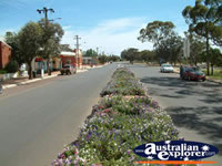 Pretty main street in Dalwallinu . . . CLICK TO ENLARGE