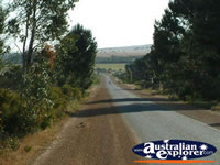 Road Between Three Springs & Eneabba . . . CLICK TO ENLARGE