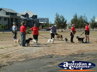 Geraldton Waiting for Parade with Dogs . . . CLICK TO ENLARGE