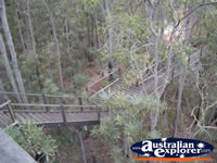 View Jarrah Canopy Walk Forest Heritage Centre in Dwellingup  . . . CLICK TO ENLARGE
