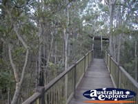 Dwellingup Jarrah Canopy Walk Forest Heritage Centre . . . CLICK TO ENLARGE