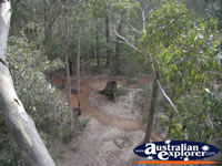 Manjimup Diamond Tree Lookout Half Way Up . . . CLICK TO ENLARGE