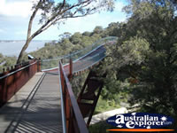 Kings Park - Lotterywest Federation Walkway Arched Bridge - Perth