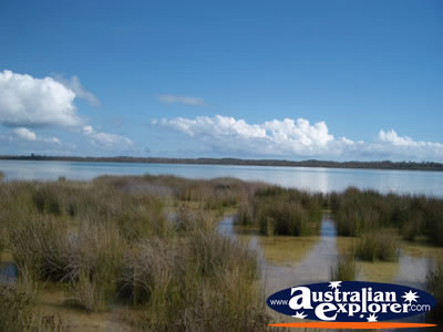 Yalgorup National Park Lake Clifton . . . CLICK TO VIEW ALL LAKE CLIFTON POSTCARDS