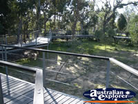 Yanchep National Park Boardwalk . . . CLICK TO ENLARGE